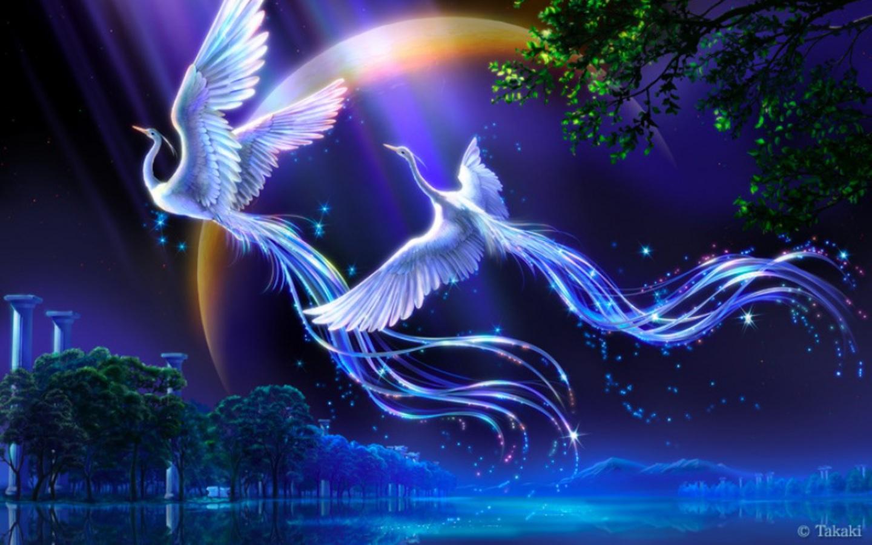 Birds of Paradise Computer Wallpapers Desktop Backgrounds 1440x900 1440x900
