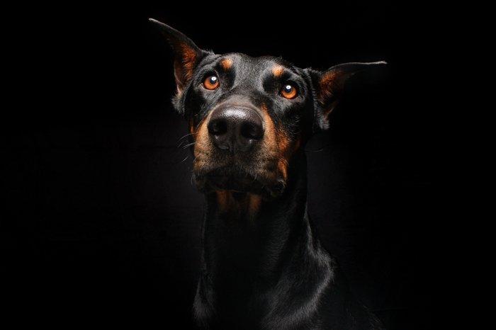 Rock Dog Full Movie Free Online