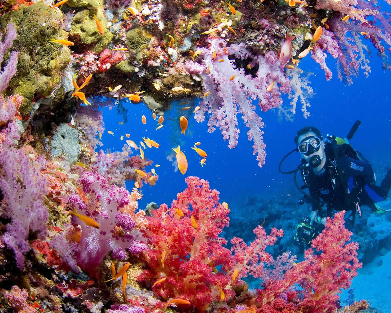 Underwater Photography Wallpaper Colorful Underw...