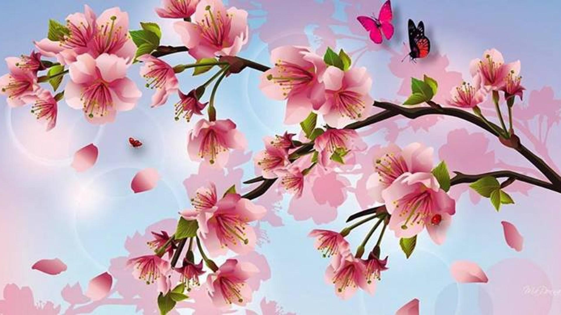 Cherry Blossom Desktop Wallpapers Cherry Blossom Pictures 1920x1080