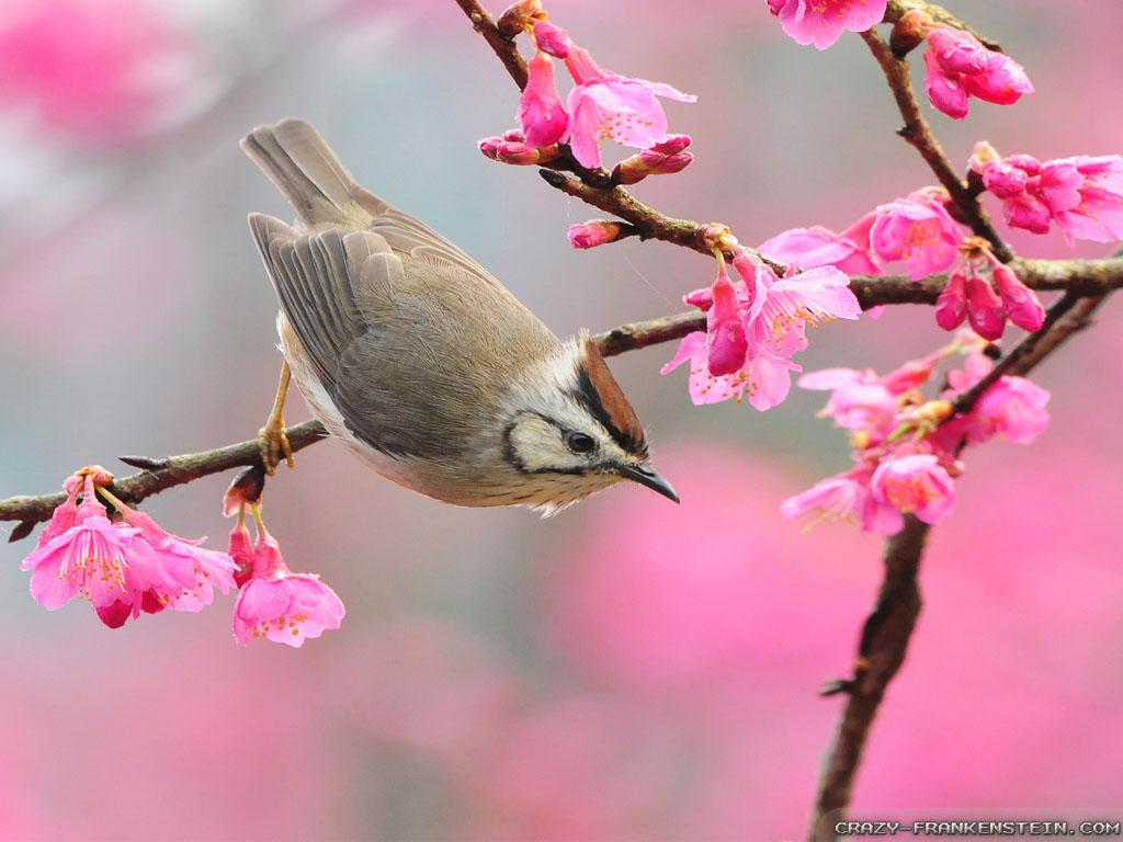 Bird At Spring Time Wallpapers 1024x768 pixel Popular HD Wallpaper 1024x768
