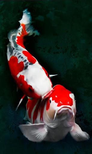 Free Download Koi Fish Live Wallpaper 307x512 For Your Desktop