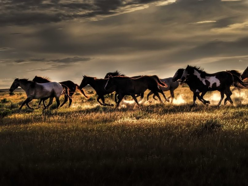 wild horses racing wallpaper - photo #15