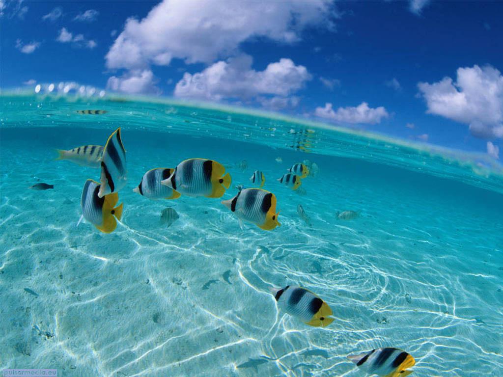 backgrounds ocean desktop background desktop backgrounds ocean 1024x768