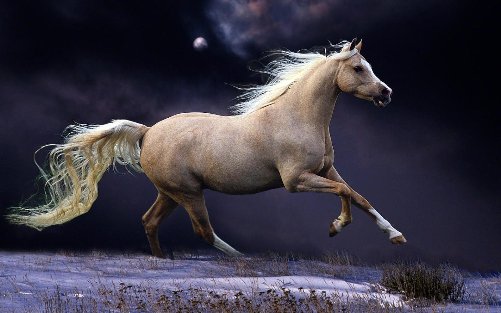 Wallpaper of a fast running brown horse in the winter HD horses 1600x1000