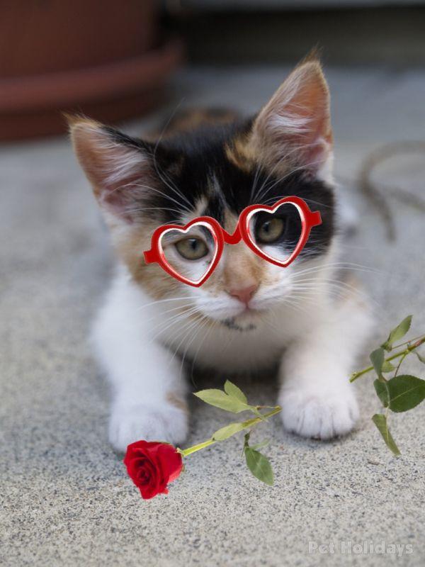Kitten Valentines Day picture 600x800