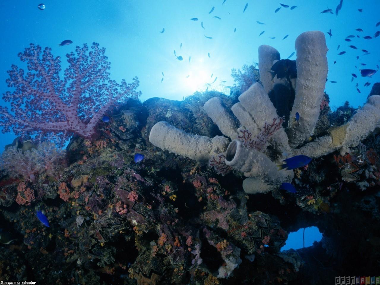 Coral reef wallpaper 3526   Open Walls 1280x960