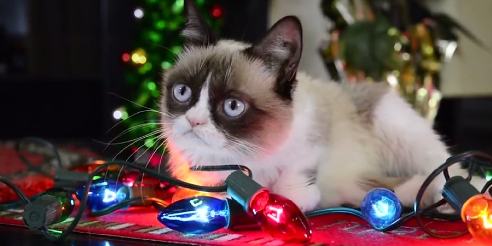 Grumpy Cat Christmas Wallpaper - WallpaperSafari