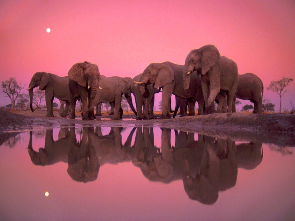 45 Elephant Wallpaper For Desktop On Wallpapersafari