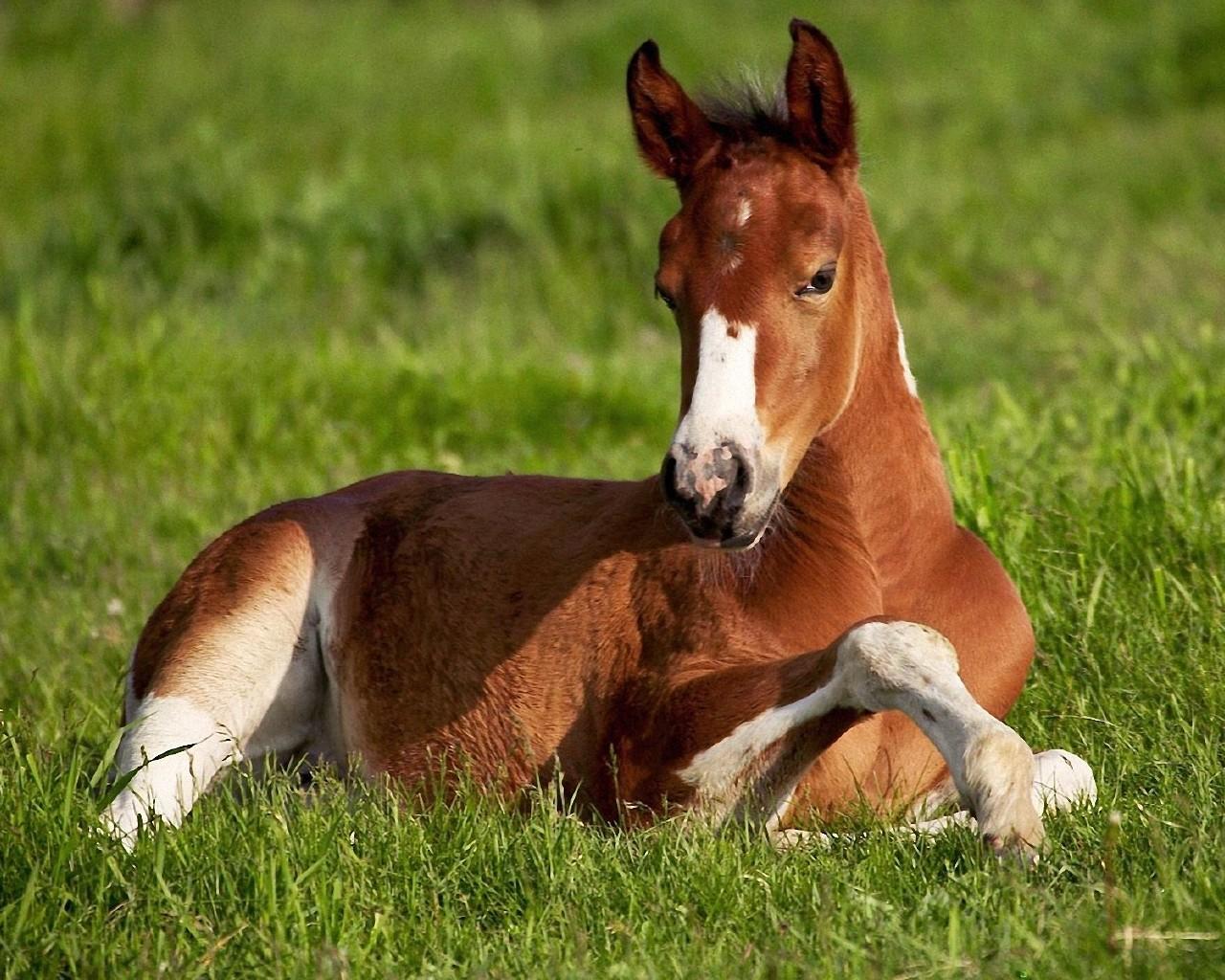 Wallpaper Beautiful Horse Animals PicsFabcom   Desktop Wallpapers 1280x1024