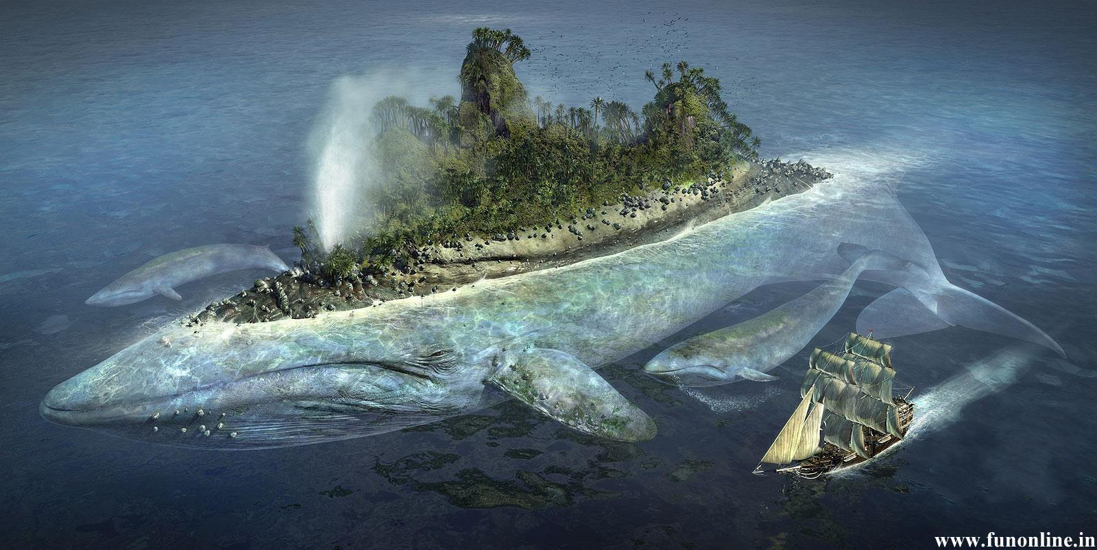 Blue Whale Wallpapers 1600x802
