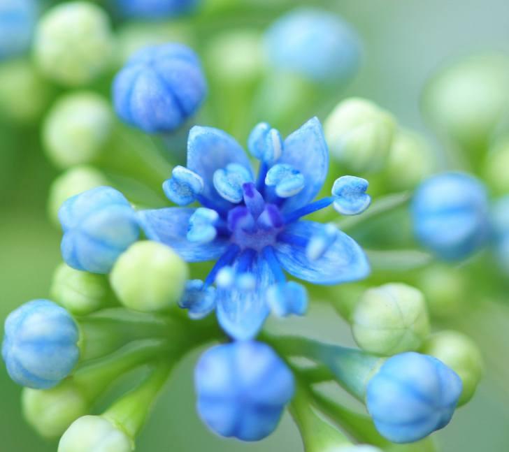 Blue flower HD modern wallpaper 12920140827129 More about Ocean Life 728x647