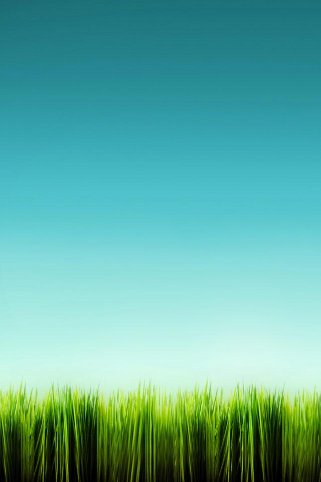 Hd Grass Wallpaper Iphone