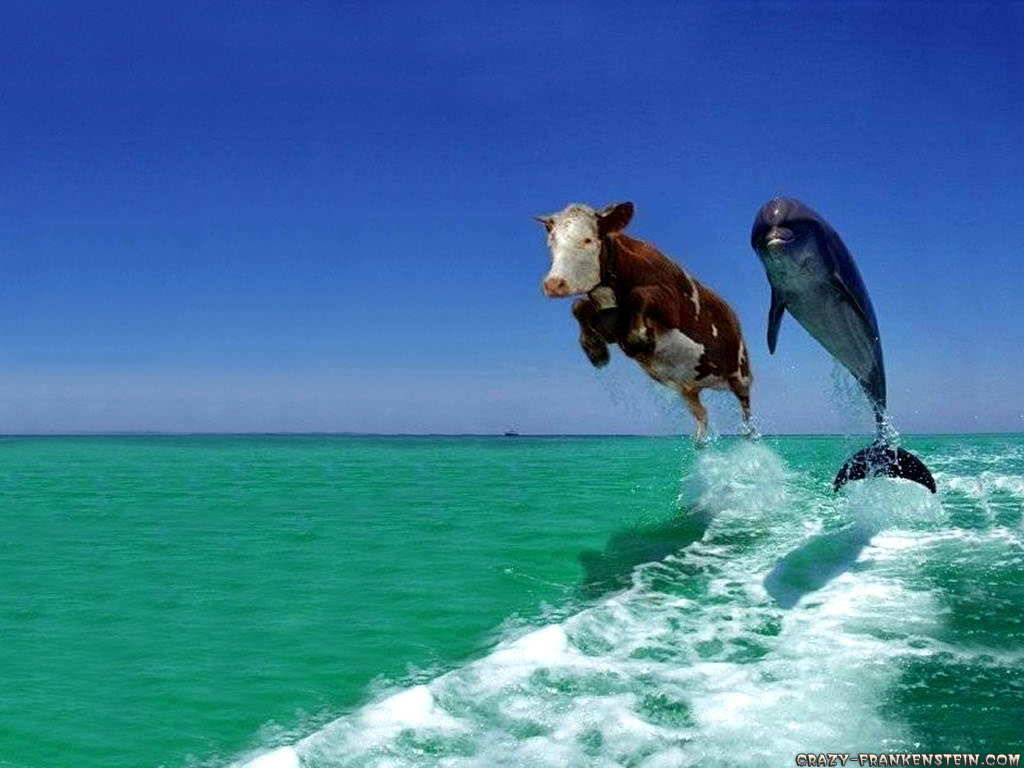 cool wallpapers funny animal wallpapers 1024x768