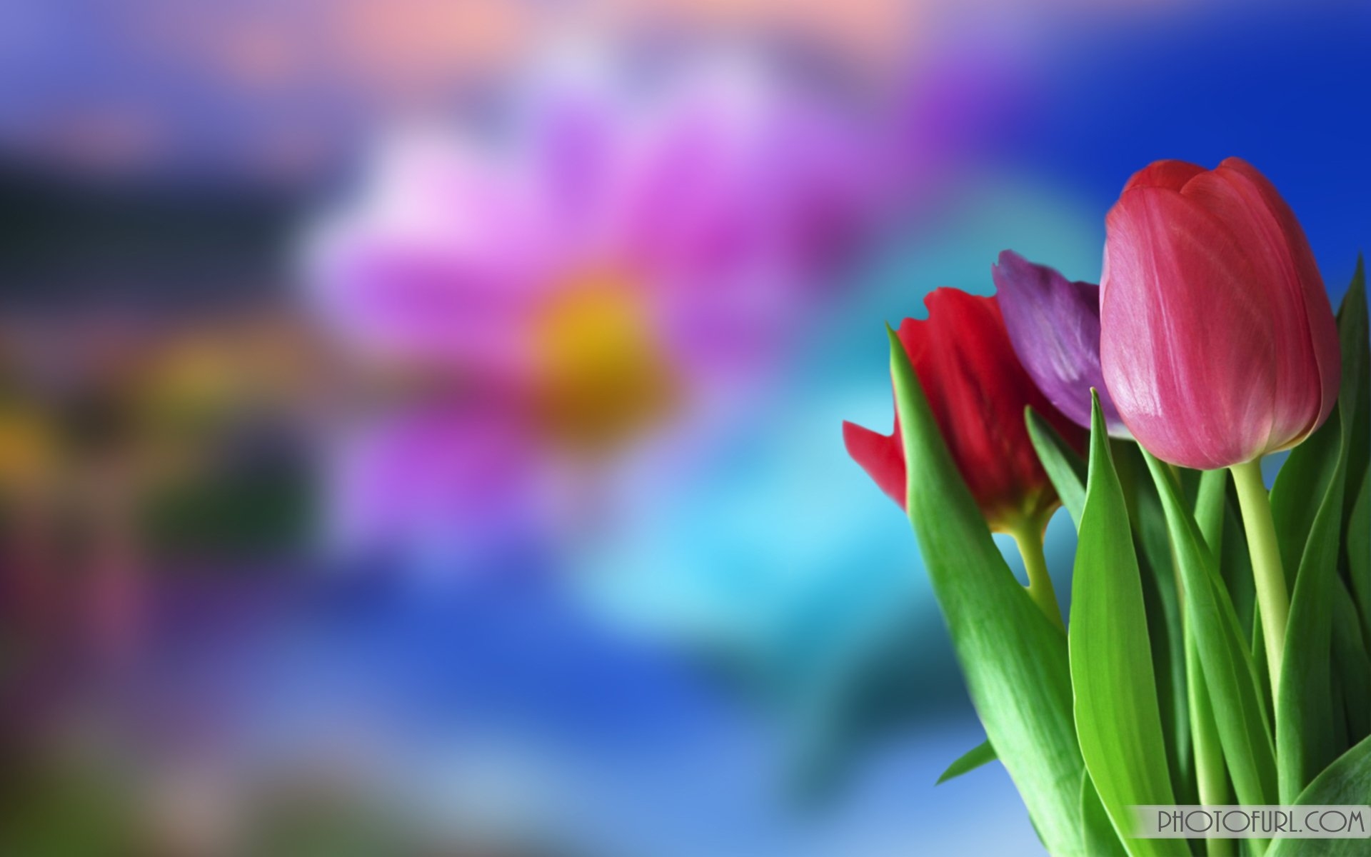 animated flowers wallpapers