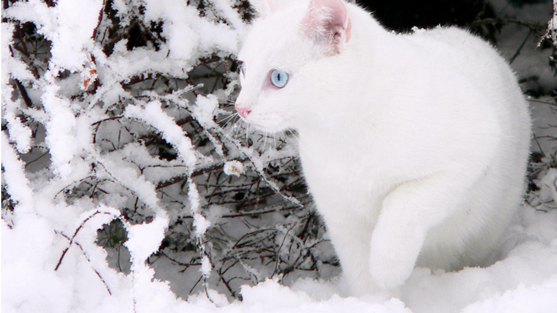 Cats in Snow Wallpaper - WallpaperSafari