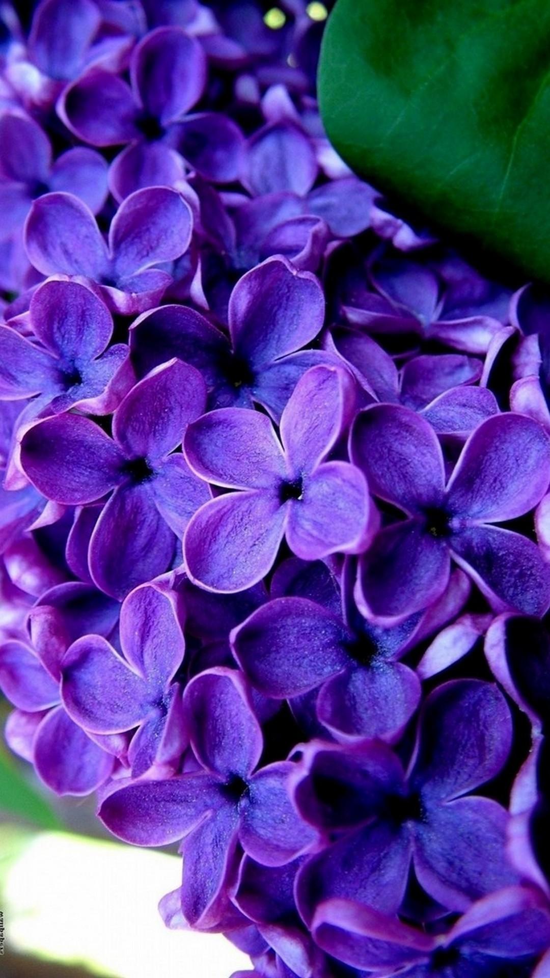 Purple Flowers Mobile Wallpaper HD 2020 Cute Wallpapers 1080x1920