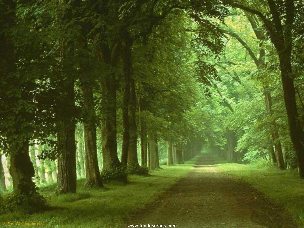 Green Road Nature Wallpaper   Nature Wallpaper 1024x768
