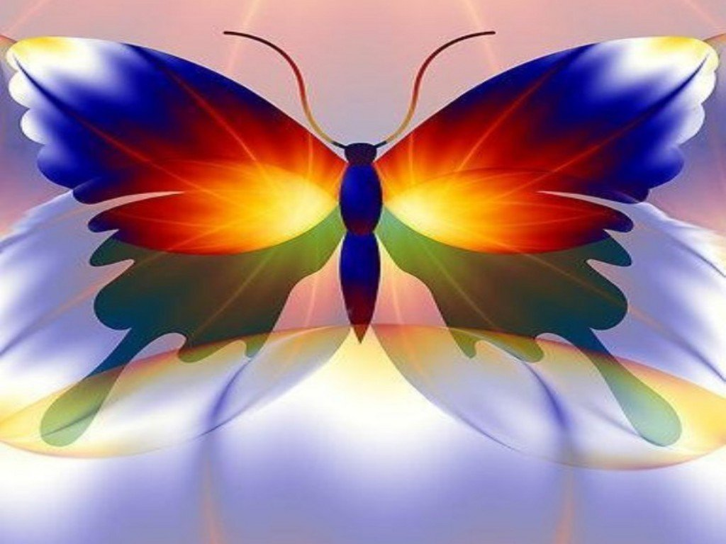 Free Download Amazing Colorful Butterfly Wallpaper 1024x768