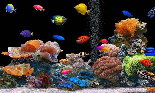Wallpaper Aquarium Hd Live Car