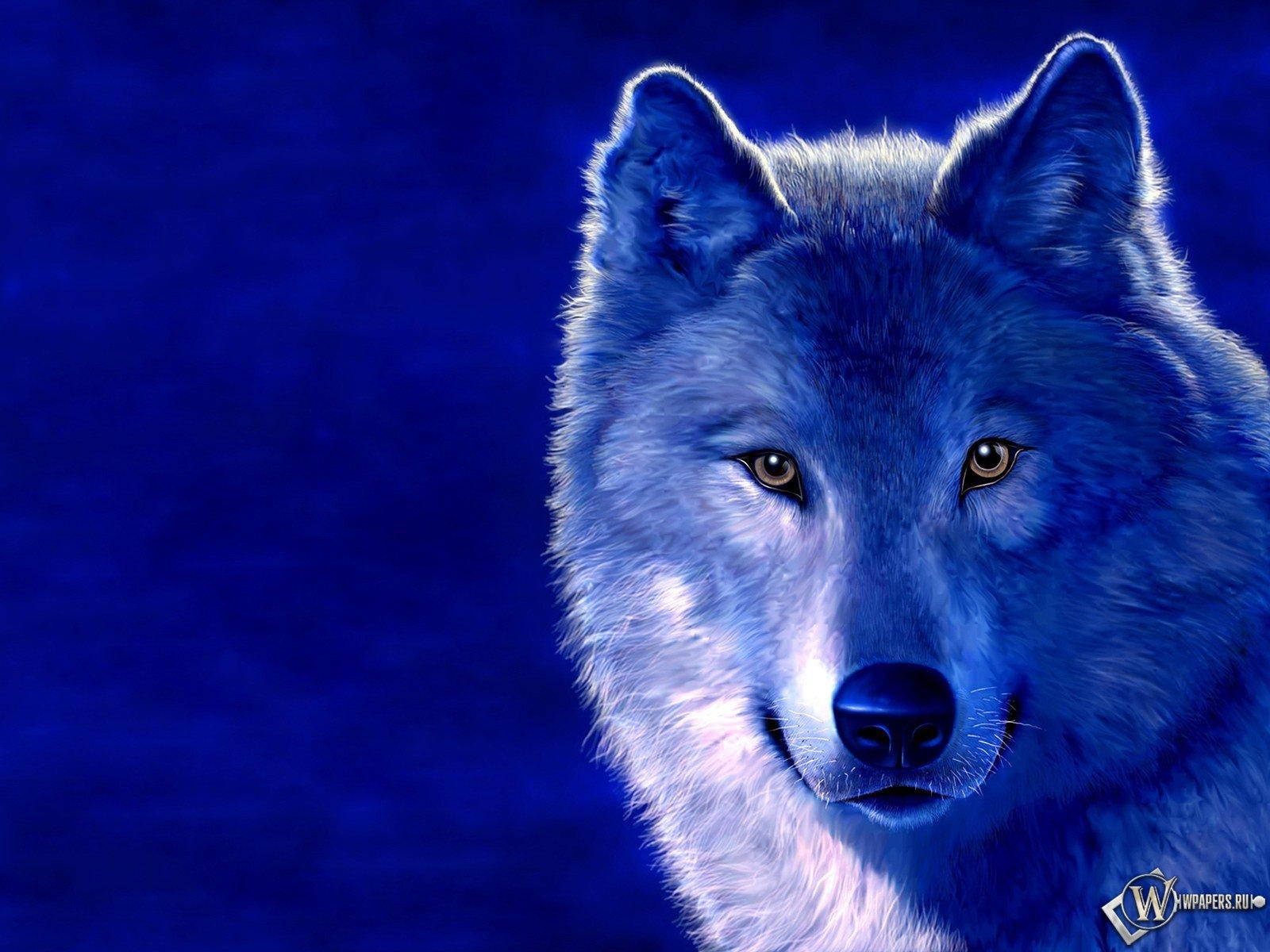 Wolf Wallpaper Background 3643 1600x1200