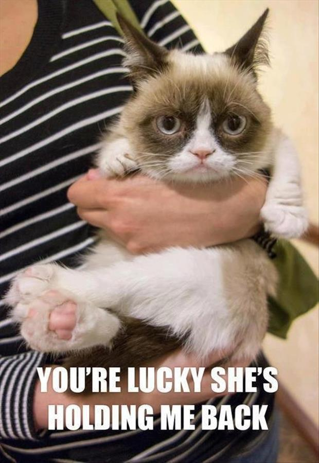 funny grumpy cat pictures   Dump A Day 620x900