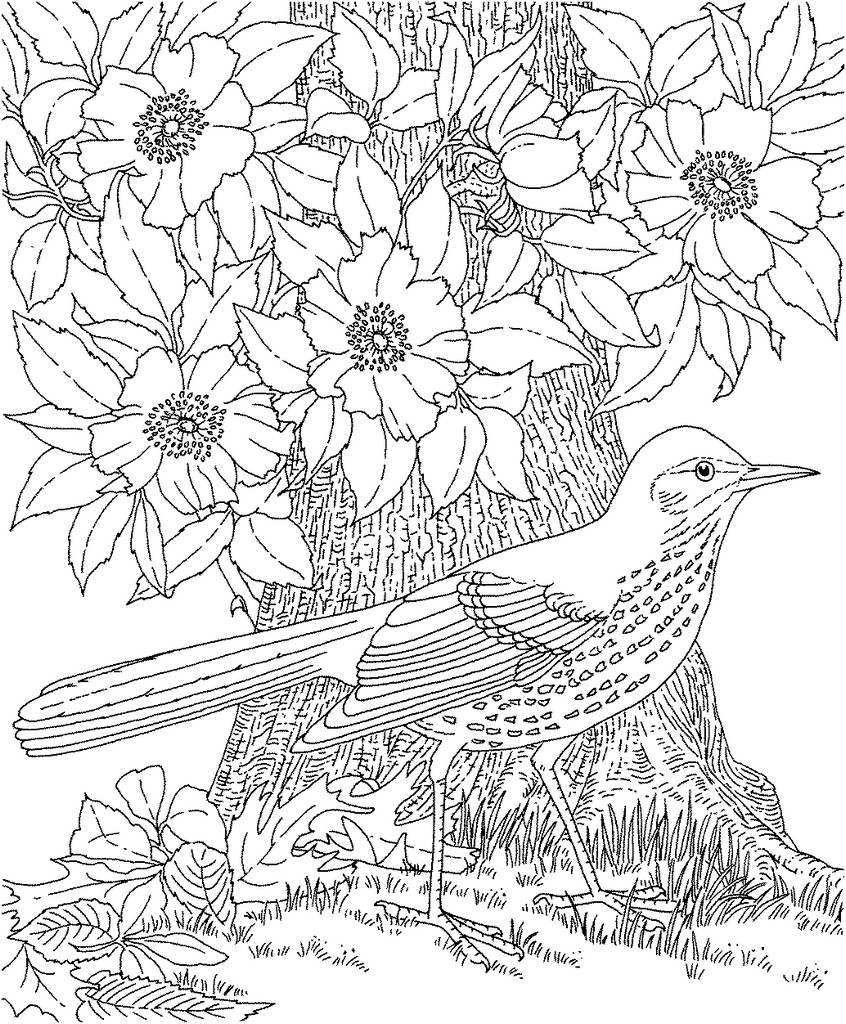 coloring pages for adults share coloring pages for adults wallpaper 846x1024