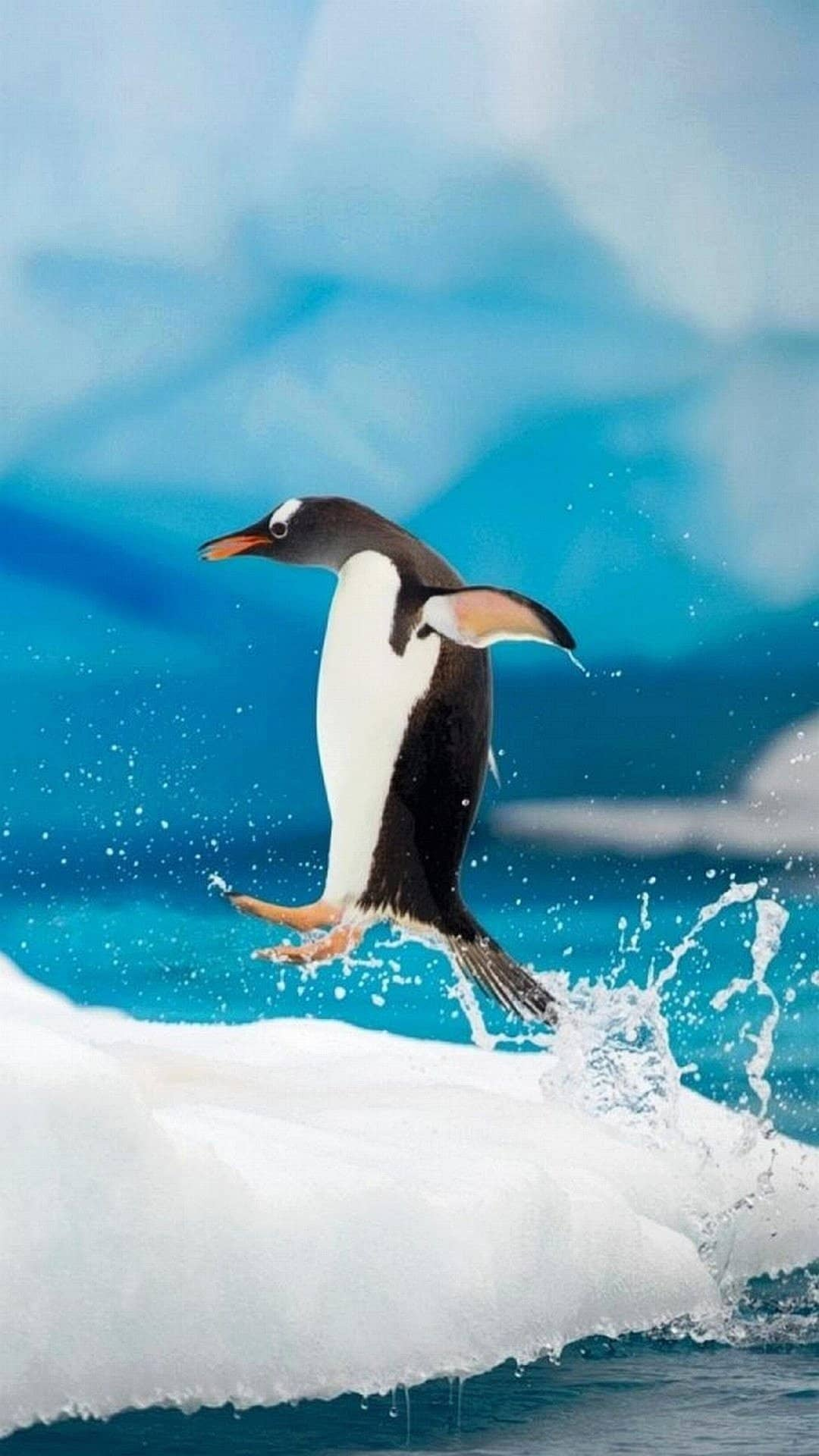 Wallpaper Iphone 7 Pinguin   Penguin Wallpaper Iphone 176840 1080x1920