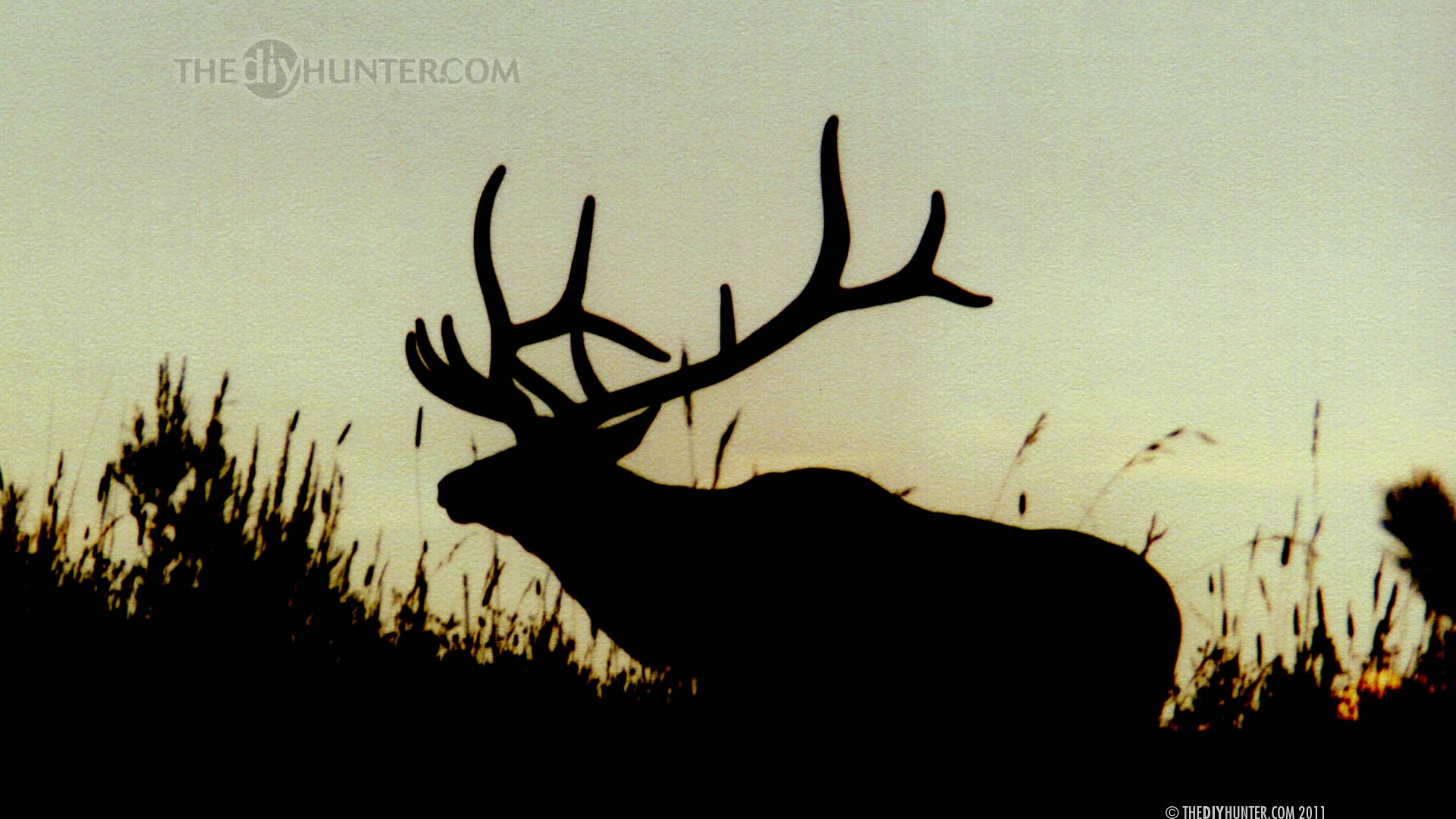 Browning Deer Desktop Wallpaper 2011   computer desktop 1920x1080