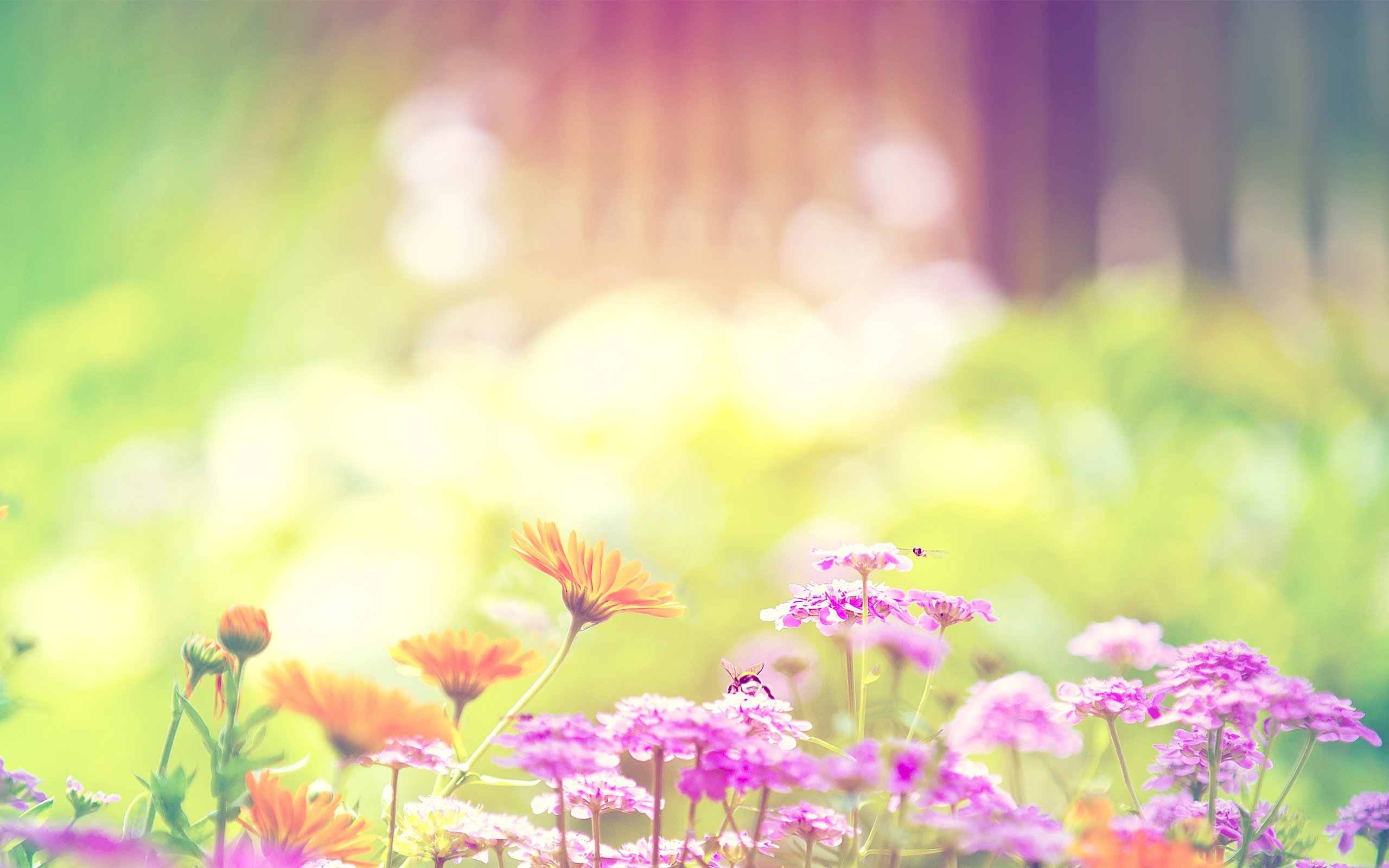 Spring Flowers Background wallpaper 2560x1600 83366 2560x1600