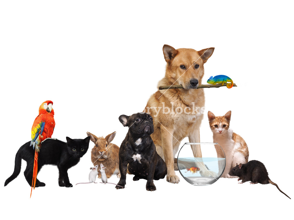 Free Download Group Of Pets Isolated On White Background Royalty Stock 1000x750 For Your Desktop Mobile Tablet Explore 41 Pets Background Pets Wallpaper Pets Background Halloween Pets Wallpaper