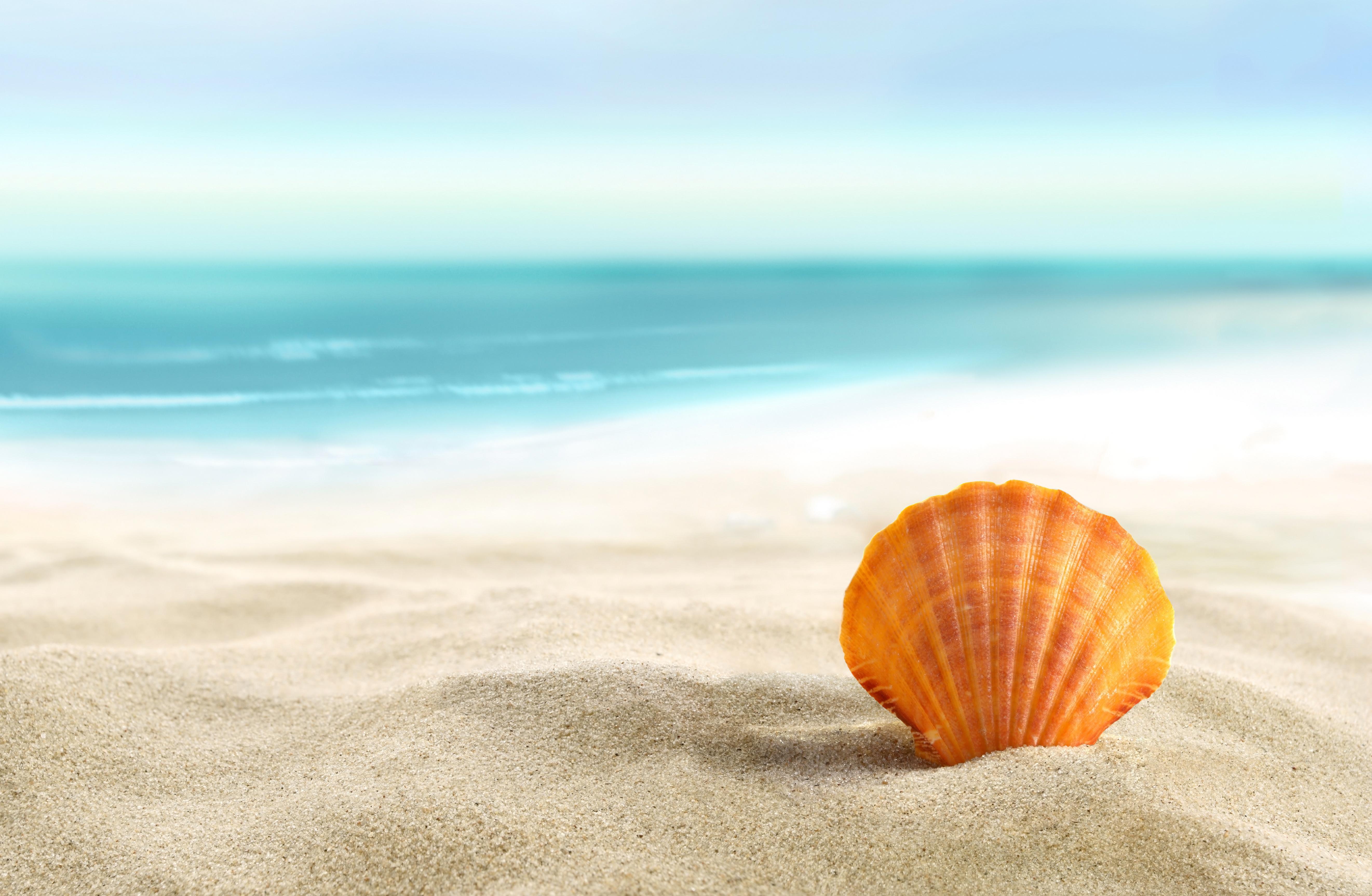 природа ракушка песок nature shell sand  № 1246795 без смс