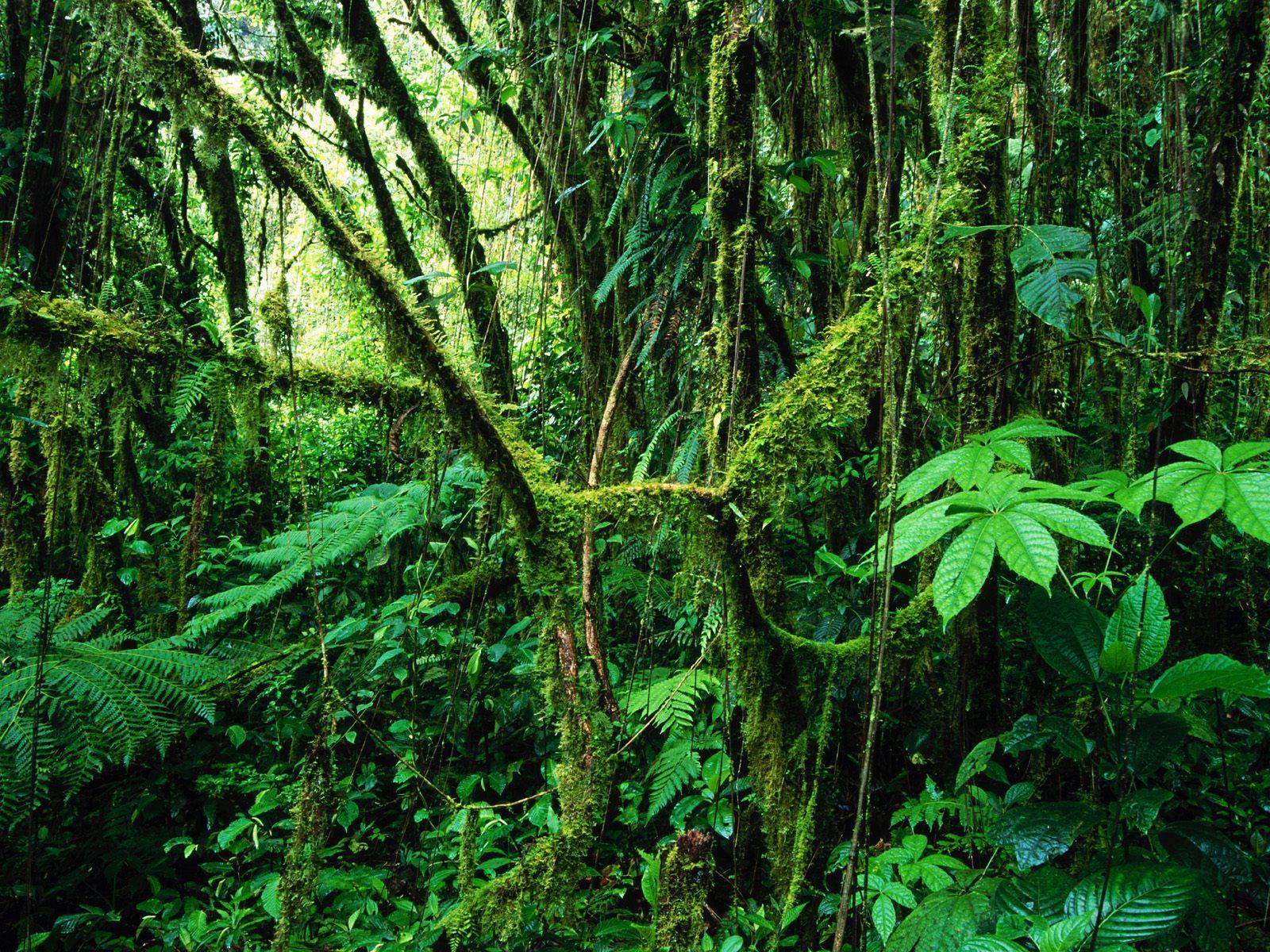 Download Rainforest Wallpaper Hd 1600x1200 43 Tropical Jungle