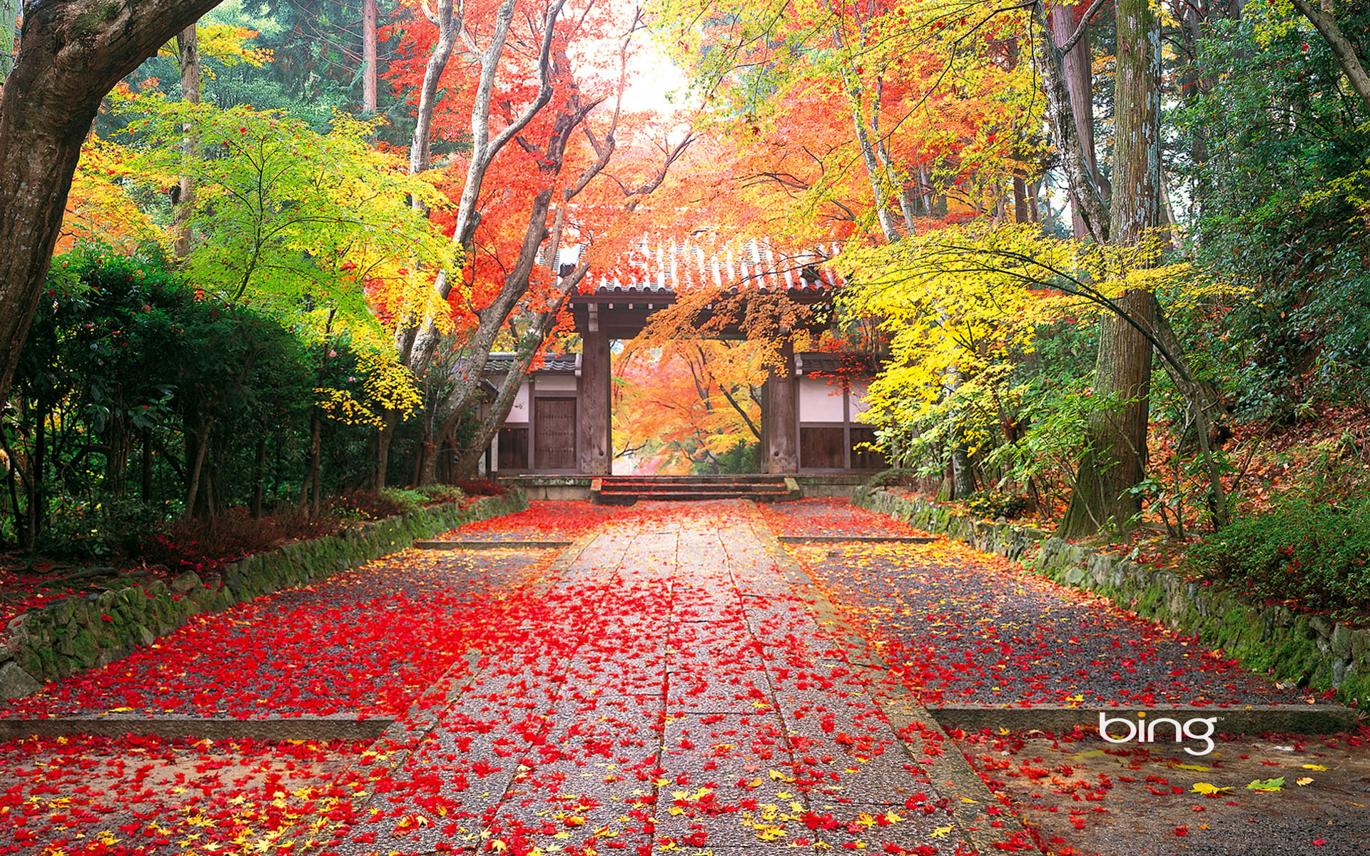 Autumn in Japan Wallpapers HD Wallpapers 1920x1200