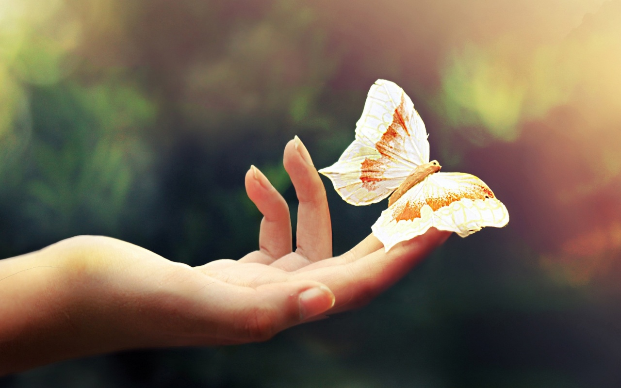 Cute Butterfly Wallpaper   HD Wallpapers Pretty 1280x800
