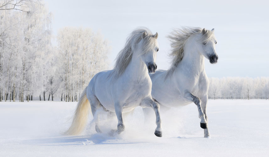 Winter Horse Desktop Wallpaper