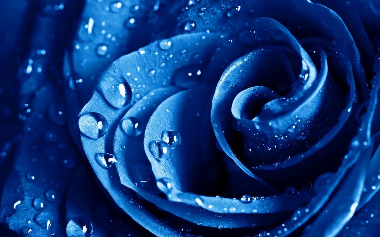 Blue Flowers Wallpaper Wide Hd