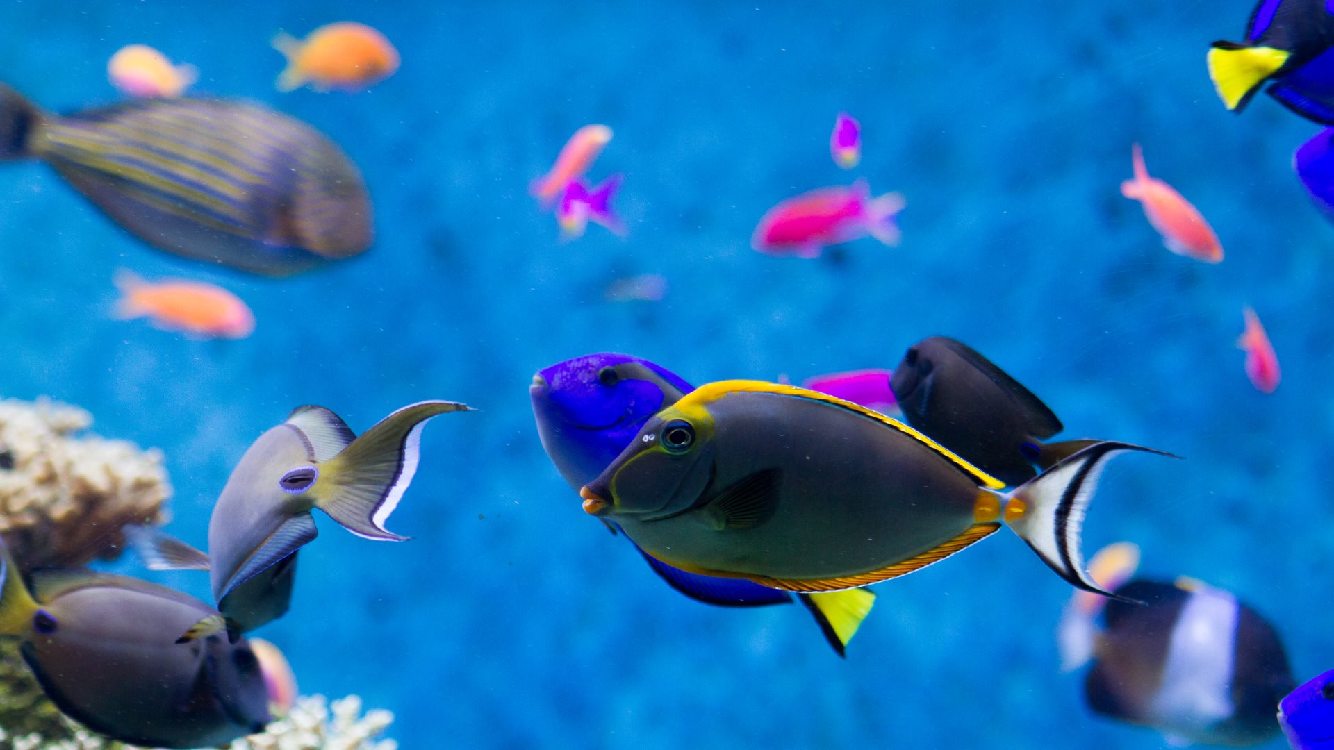 Aquarium screensaver fish tank 1080p hd - Fits On 1920x1200 1680x1050 1440x900 High Definition Hd 1080p