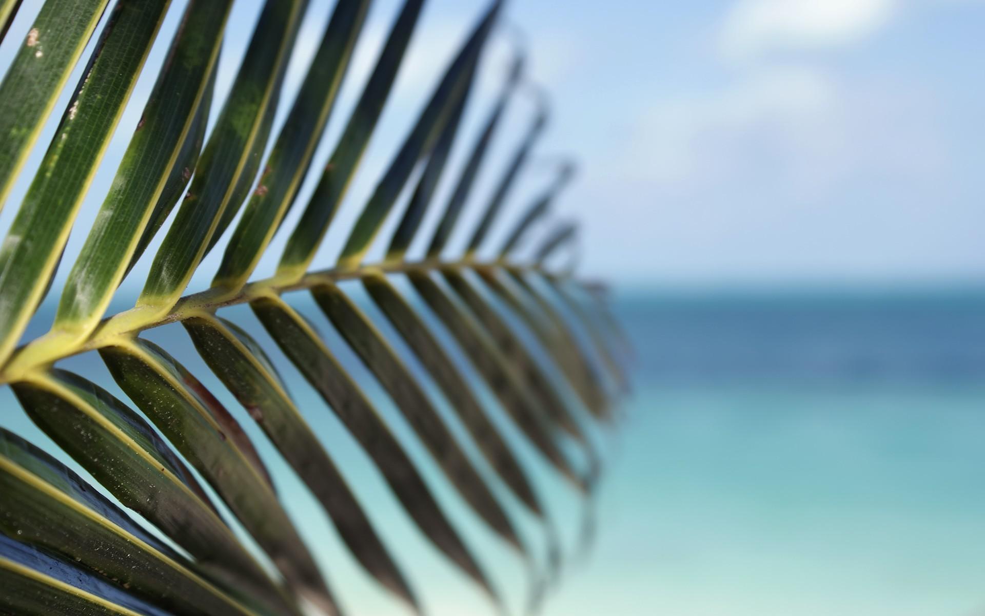 water leaf beach tropical palm trees depth of field sea wallpaper 1920x1200