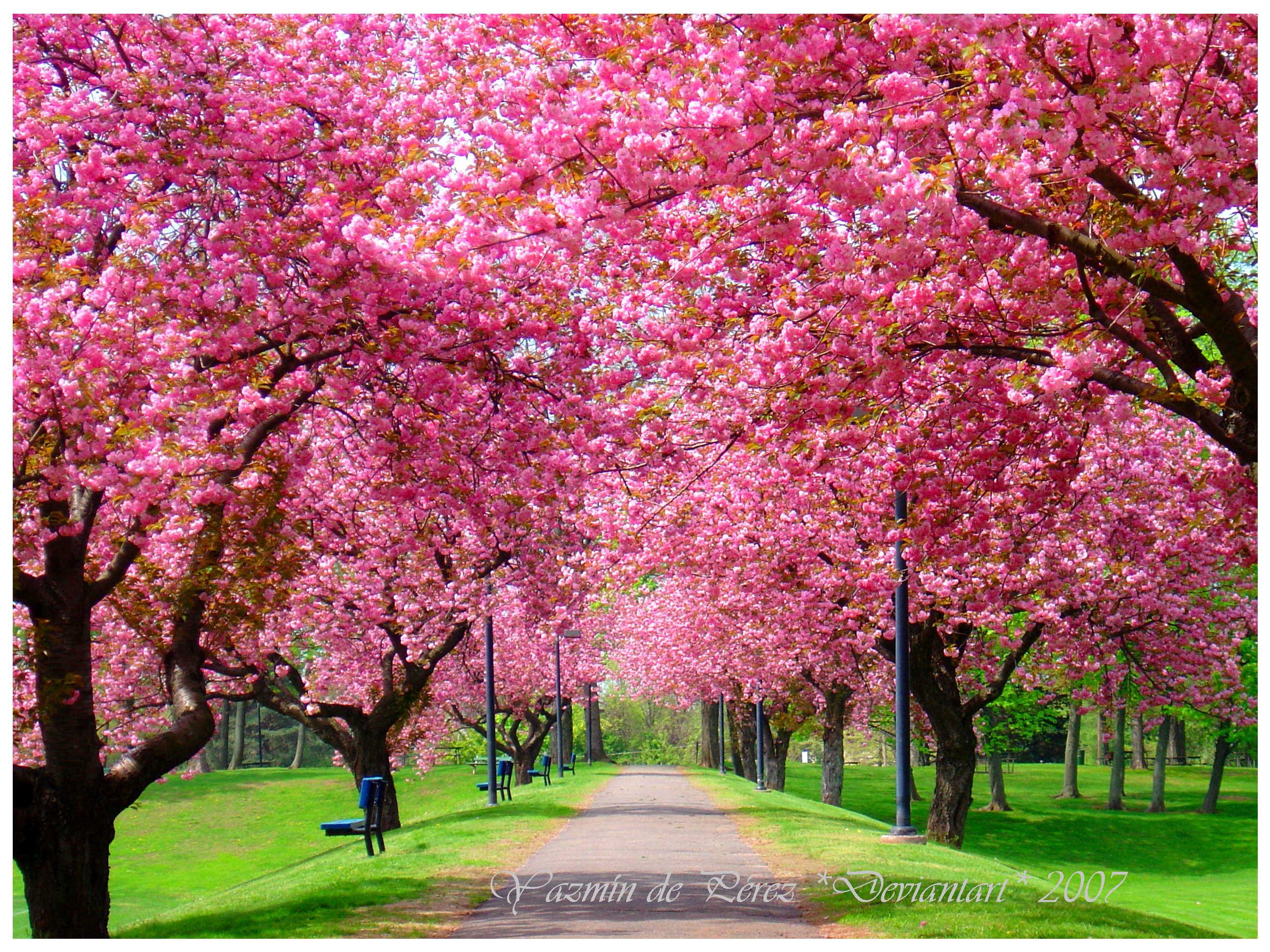 Springtime Wallpaper - WallpaperSafari