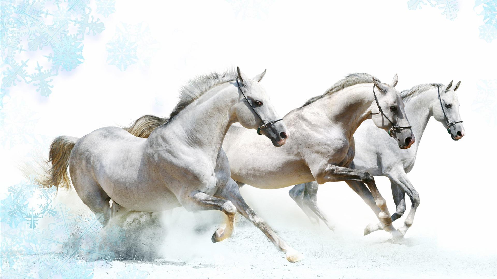 White Winter Horses HD Wallpaper   Stylish HD Wallpapers 1920x1080