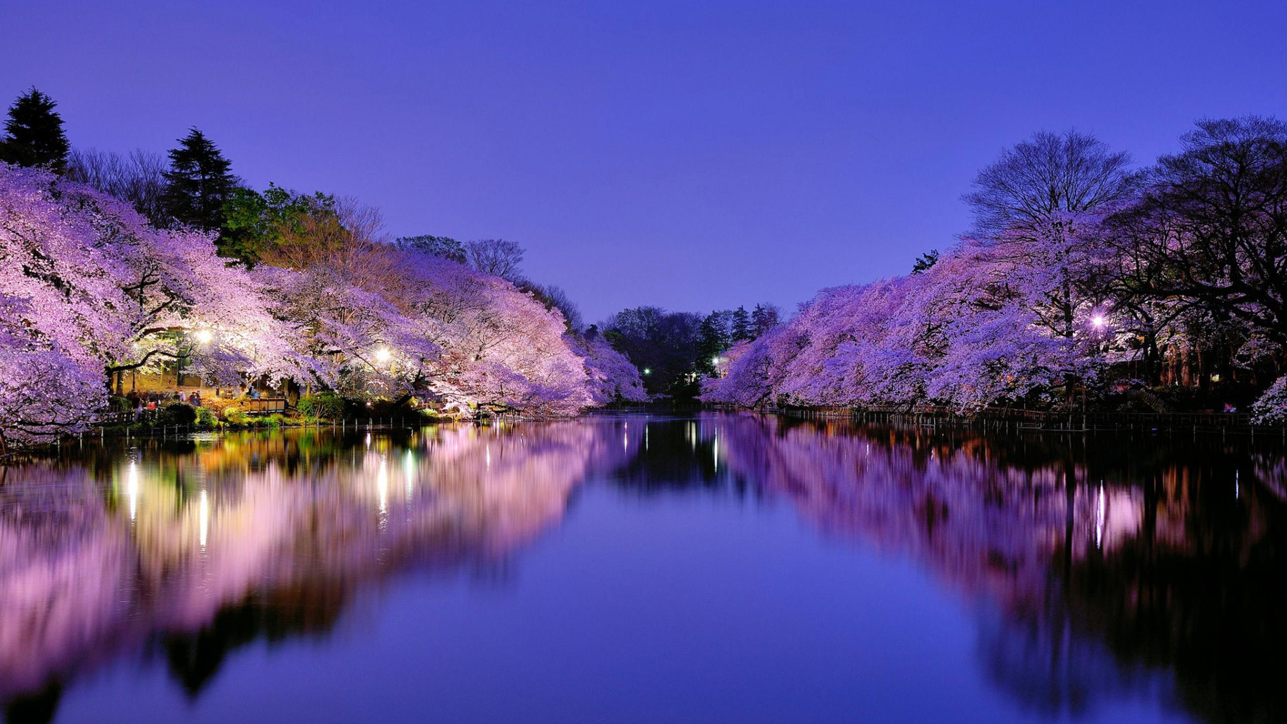 Spring in Japan Wallpapers HD download 2560x1440