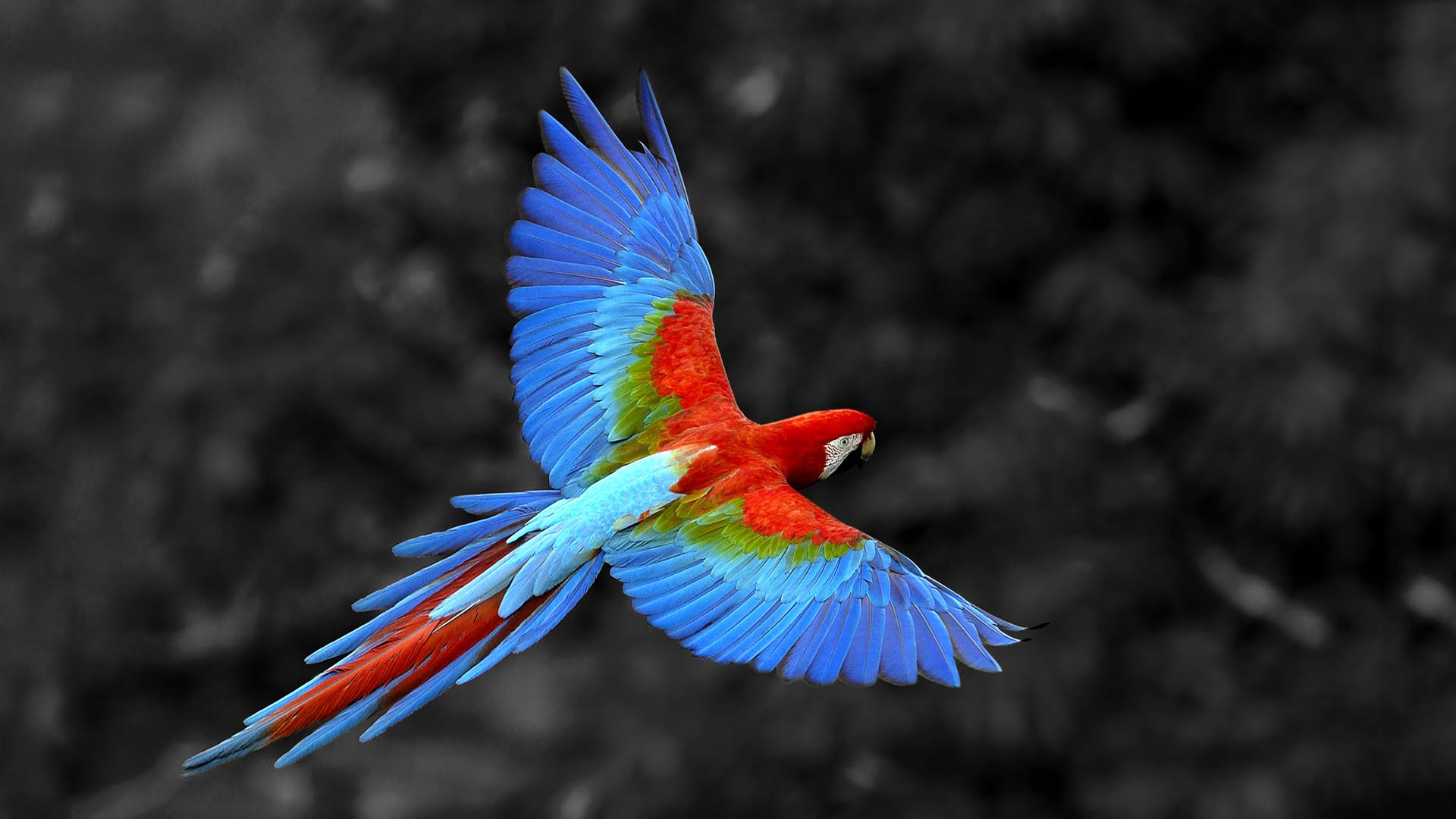 Parrot Wallpaper Animals background   WallpaperAsk 1920x1080