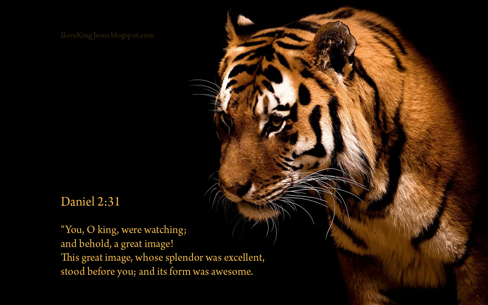 Awesome tiger Wallpaper   Christian Wallpapers and Backgrounds 1600x1000
