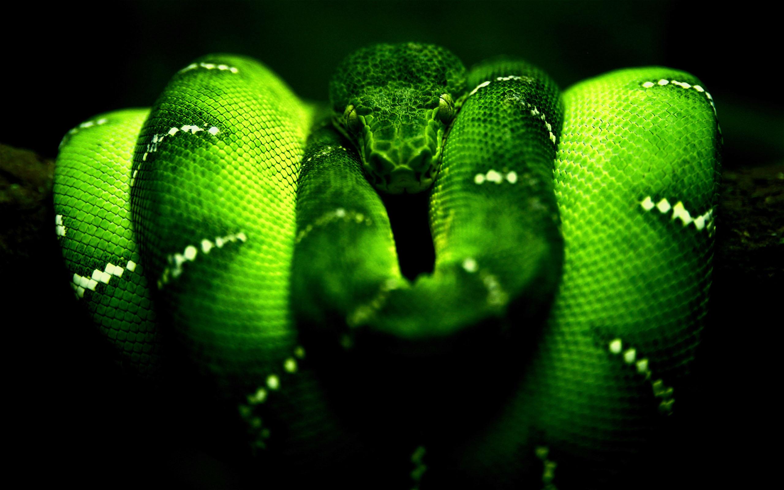 Neon Snake Wallpaper 2560x1600