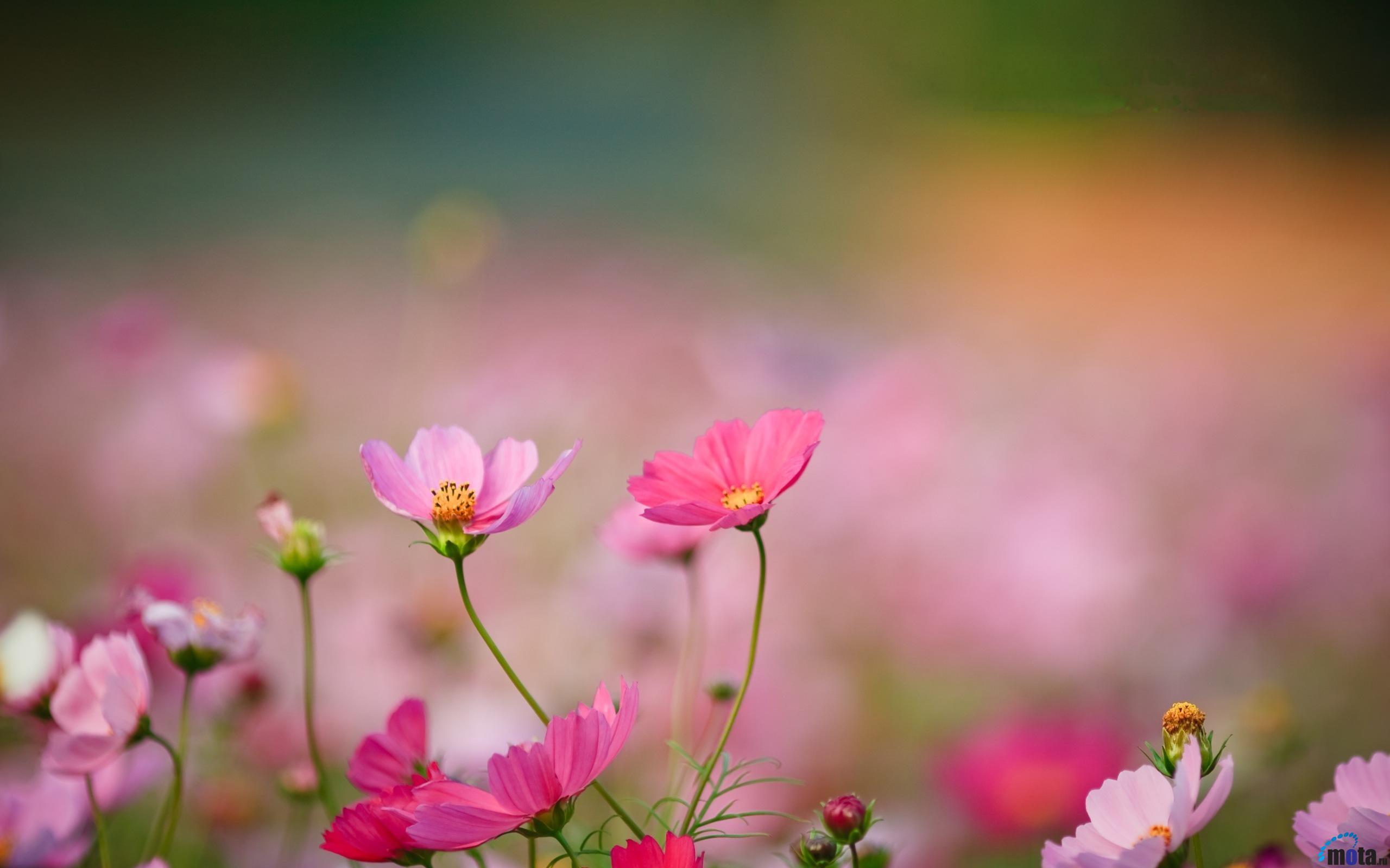 Wild flower wallpaper wallpapersafari - Flower wallpaper movie ...