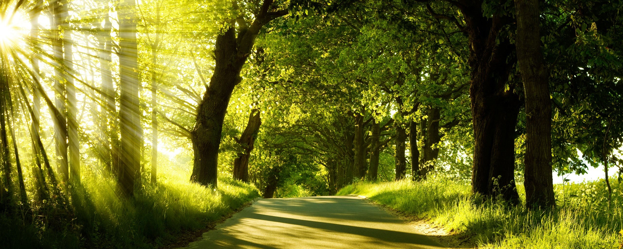 Green Nature Dual Monitor Wallpapers HD Wallpapers 2560x1024