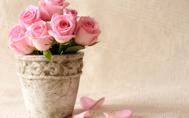 HD Wallpapers Beautiful Pink Flowers Petals HD Wallpaper HD 1440x900