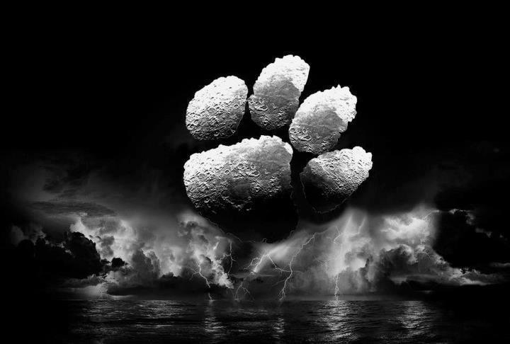 Wallpaper Paw - WallpaperSafari Tiger Clemson