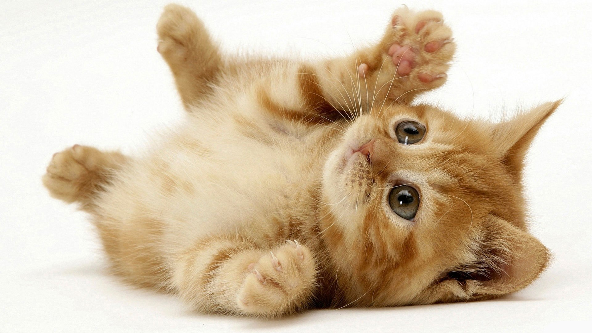 cute cats wallpaper 2 filesize x1024 wallpaper backgrounds 1280 1024 1920x1080